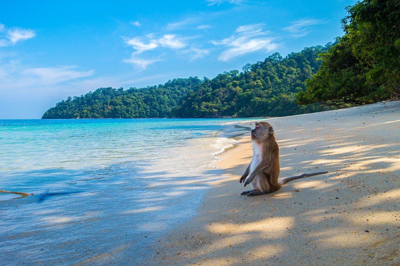 Thailand Strand Affe